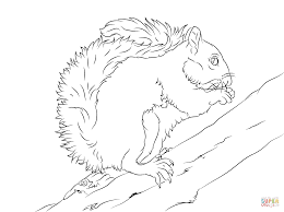 Small Picture Eastern Grey Squirrel on A Tree coloring page Free Printable