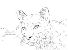trend cougar coloring pages mountain lion drawing at getdrawings com free for personal use print mountain