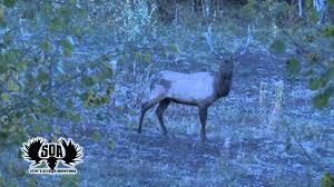 Utah Bull Elk Taken By Steve West With A Powerbelt Bullet