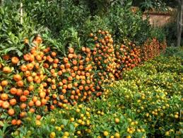 Different Fruit Trees Sorts With Names Set Garden Trees And Berry Different Fruit Trees