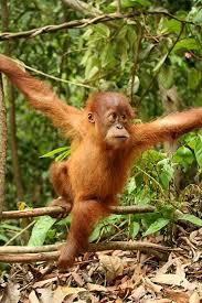 live jungle animals. Wonderful Live Rainforest Animal Species Intended Live Jungle Animals A