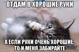 Картинки по запросу картинки люблю тебя мой котенок