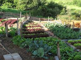 Small Picture 464 best Cottage Potager images on Pinterest Gardening