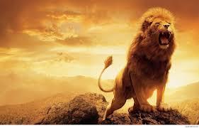 Roaring Lion Wallpaper Hd 1080p ...