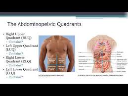In anatomy and physiology, you'll learn how to divide the abdomen into nine different regions and four different quadrants. 05 Introduction To Human Anatomy Abdominolpelvic Regions And Quadrants Video Youtube