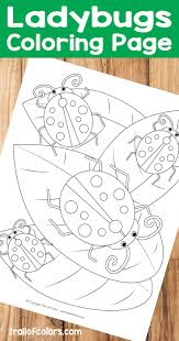 Butterfly Coloring Page For Adults - Trail Of Colors