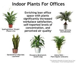 small plants for office. Indoor Plants For An Office Поиск в Google Small W