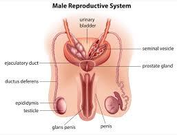 testicular torsion. testicular torsion ,