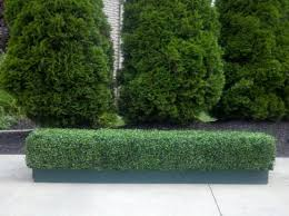 ef 2311 custom made outdoor indoor artificial boxwood hedge