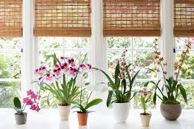 House Plant Indirect Light Best Indoor Plants 6 Flowering Orchids To Grow Gardenista