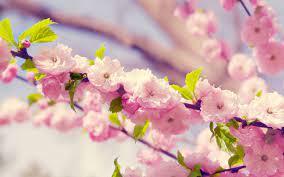 Flower Desktop Wallpapers - Top Free ...