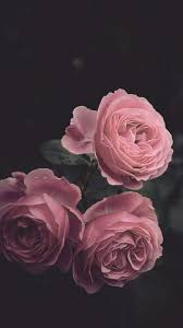 Pink Roses Aesthetic Wallpapers ...