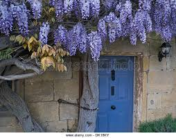 wisteria on wall of historic cote at dusk in village centre of broadway cotswolds england worcestershire