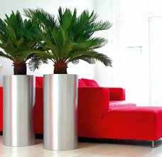 office planter. Plants For Offices From Ambius Office Planter