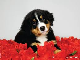 Puppies! Free Modern Dog Wallpaper ...