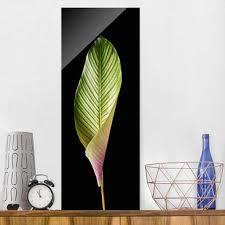 picture print on glass leaf calathea ornata on