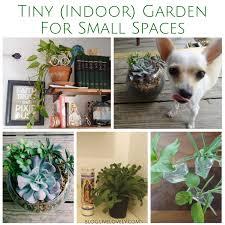 indoor rock garden ideas. Modern Rock Garden Bring The Japanese Culture To Home Hum Ideas. Indoor Garden. Ideas O