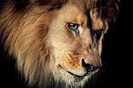 the crazy true story of the zanesville zoo escape gq 18 tigers 17 lions 8 bears 3 cougars 2 wolves 1 baboon 1 macaque and 1 man dead in ohio