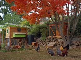 A City Of Chickens  The EPA BlogBackyard Chicken Blog