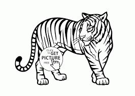 tiger animal coloring pages