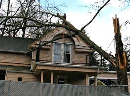 mountain view tree service storm damage removal 7 o35
