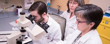 Medical Laboratory Technology - University Of Maine At Augusta