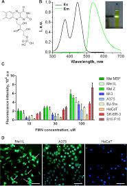 Blue Light Therapy Wavelength Photodynamic Therapy Of Melanoma By Blue Light