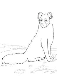 Arctic Coloring Pages Sitting Arctic Fox Coloring Page Baby Pages