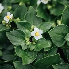 Decorumplantsflowers Instagram Posts Gramhanet