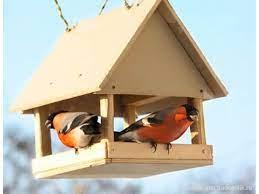 Вече ви показахме няколко идеи за къщички за птички в двора. Hranilki Za Pticite Snimki Novini Blgarski Fermer