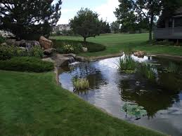 Backyard Ponds Considerations When Designing An Outdoor Pond Or Backyard Water