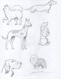 realistic dog drawing step by step. Plain Drawing Easy To Draw Realistic Dogs  Realistic Drawing Of Dogs By KitsuneNinja277  On DeviantArt On Dog Drawing Step By T