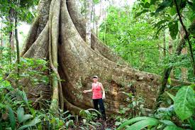 amazon rainforest. Unique Rainforest Trekking In The Amazon Rainforest Throughout R
