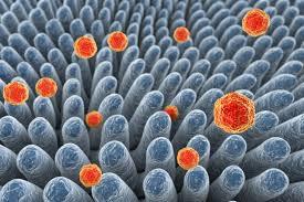 Вирусный гепатит у детей симптомы лечение Наиболее распространен среди детей вирусный гепатит А