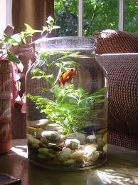 surprising indoor water garden ideas 16