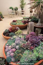 Chirpy Succulent Dish  DiggingDiggingSucculent Container Garden Plans