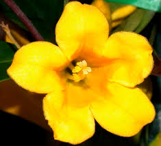 flower colours do birds and bees prefer