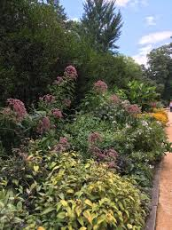 our august garden lecture series saay august 10 features charlotte glen the statewide coordinator for the nc state extension master gardener program