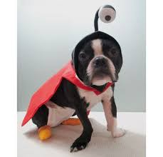 nibbler dog costume. introduction: nibbler from futurama dog costume instructables