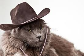 Cowboy Cat. Gray cat wearing cowboy hat against white background ,  #Affiliate, #Gray, #cat, #Cowboy, #Cat, #wearing #ad | Cat stock, Grey cats,  Cowboy