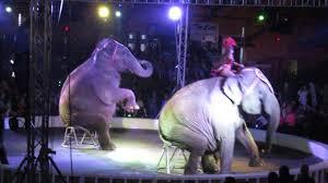 2018 4 21 elephants in albany ny garden bros circus