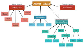 Make A Flow Chart Of Different Types Of Plany And Animal
