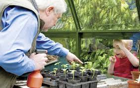 gardening tips prep your greenhouse for winter