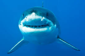 watch your back this shark week top things you didn t know  shark week 10 things to know while watching your back
