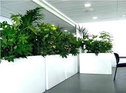indoor tree pots large indoor planters contemporary plant pots tall indoor plant pots uk indoor tree
