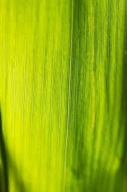 grass blade close up. Grass Blade Of Close Grasses Halme Meadow Up