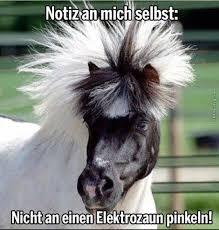 Sprüche Zum Abschied Pferd Terence Hill Steckbrief Bilder Und News