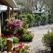 forgot to take photo of garden gate nursery gainesville fl united states seasonal flowers
