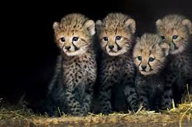 cute wild animal wallpaper. Perfect Animal Download Wallpaper And Cute Wild Animal