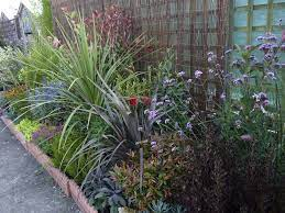 garden on a roll low maintenance